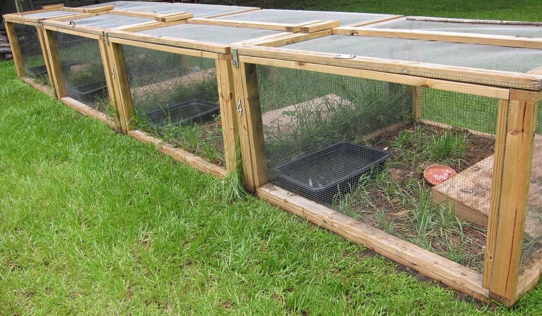 outdoor tegu cage hector s habitat