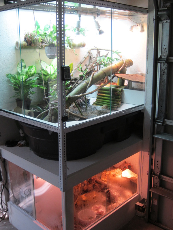 Caiman lizard enclosure - photo#14